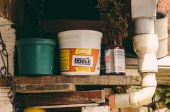Liberacin  Los Sauces (Eliminar el Dengue Colombia) Tags: colombia mosquito bacteria virus barrio comunidad sauces dengue medelln antioquia bello prevencin investigacin aedes desafo udea liberaciones aegypti pecet antidengue