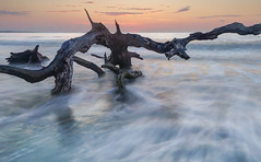 Rising from the Tides (Charles Opper) Tags: light sky seascape color beach nature water clouds sunrise canon georgia landscape dawn coast seaside spring waves tide atmosphere driftwood shore dreamy jekyllisland boneyardjourneys