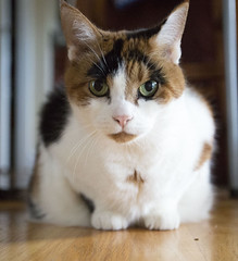 Hazel (Dexter Waverman) Tags: cute cat canon eos angle mark iii wide kitty hazel wa 5d dslr