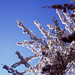 Beautiful blossom - part 4