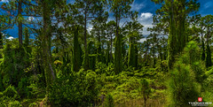 Florida Life: It's Easy Being Green (Thncher Photography) Tags: trees green landscape florida sony scenic stuart tropical lush fullframe fx martincounty hobesound palmcity southeastflorida route704 zeissfe1635mmf4zaoss a7r2 ilce7rm2 sonya7r2