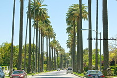 Beverly Hills Beautiful Roads (Images By Madeline) Tags: california ca landscape pacific landmark palmtrees beverlyhills southerncalifornia townscape westcoast beautifulstreets