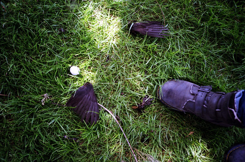 Who killed the blackbird?