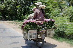 Utility Motor Bike (chrisbastian44) Tags: travel temple ancient cambodia buddhist poor culture buddhism angkorwat international oriental theorient orient siemreap angkor angkorthom thirdworld watermarket