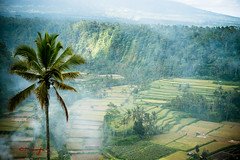 Rice Field (Chala Jan) Tags: travel bali plant nature beauty indonesia view farm smoke farming ricefield ricepatty