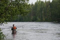 IMG_9631 (Byskan) Tags: summer june juni river fishing fisherman sweden fisher flyfishing sverige sommar fiske angler flyfisher fiskare flugfiske byske byskeälven flugfiskare byskanse byskan