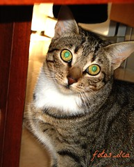Nina (fotos_ilca) Tags: cats portugal gatos 2013 fotosilca thebestofday gnneniyisi gnneniyisithebestofday