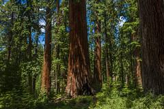 Big Brother (BaliBriant) Tags: yosemite halfdome mariposa sequoia