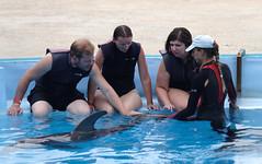 Pat (DKivlin) Tags: swim canon jay howard malta victoria dolphins kivlin eos7d