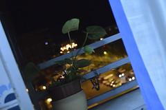 _DSC0217 (Criisss17) Tags: city blue sky plant black cold planta cars cortina window night out stars ventana lights luces noche photo cool nice nikon october mine time sweet negro flor ciudad cielo estrellas octubre barras frio coches oscuro nikond3200 2013 d3200
