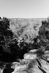 Grand Canyon (Thomas Skov) Tags: travel arizona usa landscape outdoor grandcanyon roadtrip event zm lenstagger leicam9 biogont235