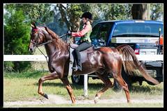 Serenity Saddlebred Horse Show (klick4) Tags: shows rider bit saddle equine briddle saddlebredhorses