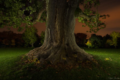 old tree - lightpainting - I (Ralph Oechsle) Tags: light lightpainting tree solitude darkness led fenix flashlight cree badenwrttemberg schlosssolitude castlesolitude fenixtk75 tk75 lustschlosssolitude