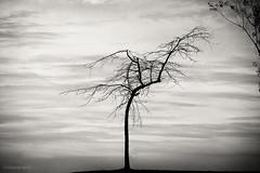 pass over me (bluechameleon) Tags: autumn trees blackandwhite bw leaves vancouver clouds empty branches lonely stark emptiness vanierpark bluechameleon sharonwish bluechameleonphotography