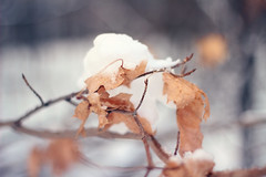 IMG_26322 (Cassandrajade) Tags: wood winter snow ontario canada cold tree nature beautiful leaves weather canon photography leaf pretty branch natural bokeh