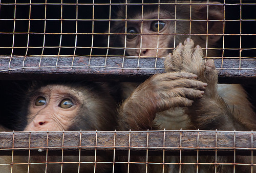 2013-11: Halong Bay: Caged Monkeys