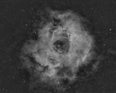 NGC2237 (Rosette Nebula) - Ha (Gingergeek) Tags: nebula rosette monoceros ngc2237 pixinsight Astrometrydotnet:status=solved Astrometrydotnet:id=nova202876