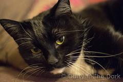 Cat Watch! (Daisy In The Dark (MagicMynx)) Tags: cat blackcat greeneyes moggie