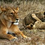 Kenya 2005