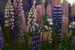 Nature's bouquet (Kristofor & Rebekah) Tags: torresdelpaine