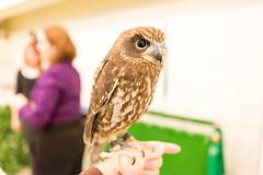 (GenJapan1986) Tags: bird animal japan owl  osaka  25mm  2014    nikond600  zf2 distagont225