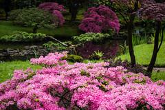 Japanse Tuin Clingendael 2014-02262 (Arie van Tilborg) Tags: japanesegarden denhaag thehague clingendael japansetuin clingendaelestate landgoedclingendael