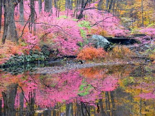 Fall Pink Reflection