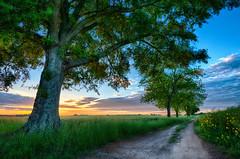 The Farmer's Road (shutterclick3x) Tags: trees sunrise dawn countryside farm dirtroad backroads treelinedroad frankloose sunrisethoughtrees