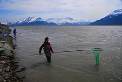 Hooligan Fishing Alaska (MarculescuEugenIancuD5200Alaska) Tags: alaska hooliganfishing outstandingromanianphotographers