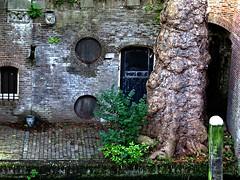 utrecht (gerben more) Tags: door tree window netherlands utrecht nederland doorway werfkelder