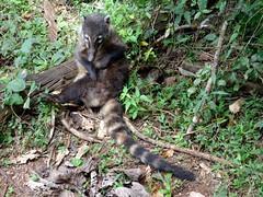Iguazu (Arg)-55