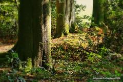 Stammhalter (grafenhans) Tags: minolta 7d konica 40 dynax wald baum stamm 3570 grafenwald bckenbusch