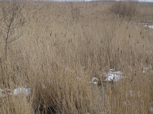 20150219_116_Wienerwaldsee (Large)