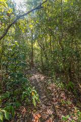 Jungle on Pilau Besar, Malaysia (tik_tok) Tags: travel trees sea forest island asia southeastasia jungle malaysia mersing besar pulaubesar
