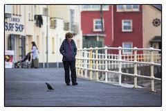Lady, bird (Frank Fullard) Tags: street ireland portrait irish bird lady clare walk candid walker promenade railings lahinch pailing lehinch fullard frankfullard