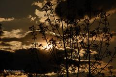Sunset through bushes (lg-photographic) Tags: trees light sunset summer sky orange sun color tree nature colors weather yellow germany dark deutschland lights evening abend licht nikon warm mood moody sonnenuntergang outdoor sommer natur himmel gelb rays sunrays sonne farbe bäume baum sonnenstrahlen harz dunkel wetter stimmung lichter farben clausthal zellerfeld strahlen drausen clz d5200