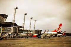 Spotter Day - Recife (Gustavo Penteado) Tags: azul plane star day aircraft air aeroporto re avio tam gol aviao turbina infraero spotter avianca aeronave guararapes aliance
