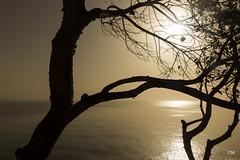 De dins del cor. (.carleS) Tags: sea sun sol canon eos mar mediterranean alba pins amanecer pinos nou cala mediterrneo poble mediterrani moraig 60d benitatxell caeduiker