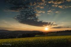 Sonnenuntergang beim Rapsfeld / Sunset on rape field (Claudia Bacher Photography) Tags: sunset clouds schweiz switzerland sonnenuntergang suisse himmel wolken rape raps haeven rapsfeld rapefield bülach eschenmosen