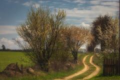 cieka (figoosia) Tags: landscape poland natura krzy chmury niebo podlasie podlachia