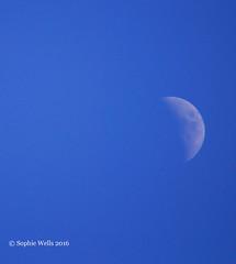 First Quarter Moon (sopwell287) Tags: blue sky moon star evening nikon quarter d60 algieba