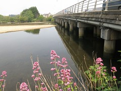Bridge (Paul McNamara) Tags: bridge ireland wicklow arklow avocariver