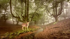 Good morning happy week my friends   #photography #nature #edit #art #collage #gazelle #photodesign #illustration #edited #petsandanimals #freeart #green (mrbrooks2016) Tags: edited photodesign gazelle illustration freeart petsandanimals nature collage art edit photography green