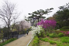 Namsan Park (withcamera) Tags: wood flowers trees wire sony seoul namsanpark  namsan     dscrx100m2  forestnamsan southkorea
