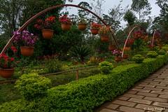 _DSC0933 (Roy Prasad) Tags: flower nature floral garden sony kerala bloom botany prasad munnar rx10 royprasad rx10m2