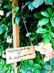 En prendre plein les sens. Que du bonheur. Les jardins secrets. (fourmi_7) Tags: roses nature fleurs jardin invitation entrer