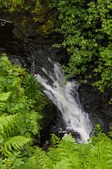 Glenariff Forest Park (ghostwheel_in_shadow) Tags: ireland fern wet water river waterfall flora europe unitedkingdom northernireland moisture damp ulster antrim moist wetness glenariffforestpark