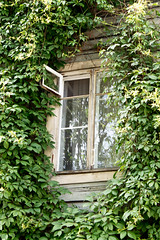 Old window in the thickets (mikhailanikaev) Tags: old window frame decoration square green brown sunny village traditional plank building wood wall retro texture architecture rural outdoors home house country wooden vintage background pattern exterior cottage glass