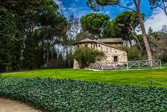 _DSC0104 (mazzini1950) Tags: madrid flores almendros parques parquedelcapricho parquequintadelosmolinos ao2016