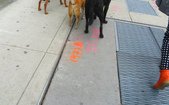 Feet Don't Fail Me Now (Robert Saucier) Tags: street newyorkcity orange newyork dogs shoes pavement manhattan sidewalk rue chiens trottoir souliers img2094